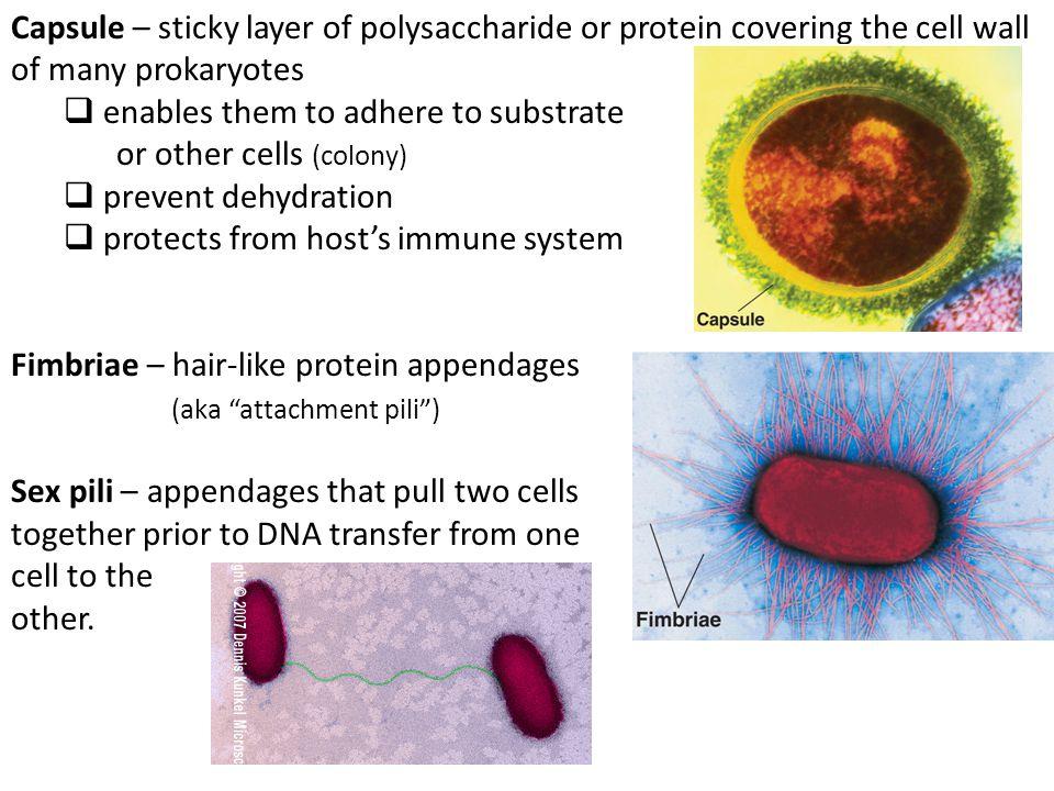 Bacteria Locomotion Flagella Slimmer than Eukaryotic flagella Not covered by plasma membrane as Eukaryotic flagella a Different molecular composition and Eukaryotic flagella Mechanism of propulsion is different than Eukaryotic