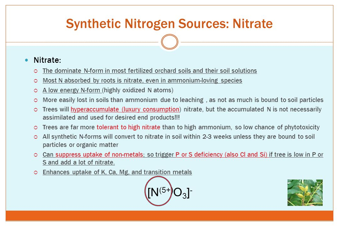 Synthetic Nitrogen Sources: Nitrate Nitrate:  The dominate N-form in most fertilized orchard soils and their soil solutions  Most N absorbed by root
