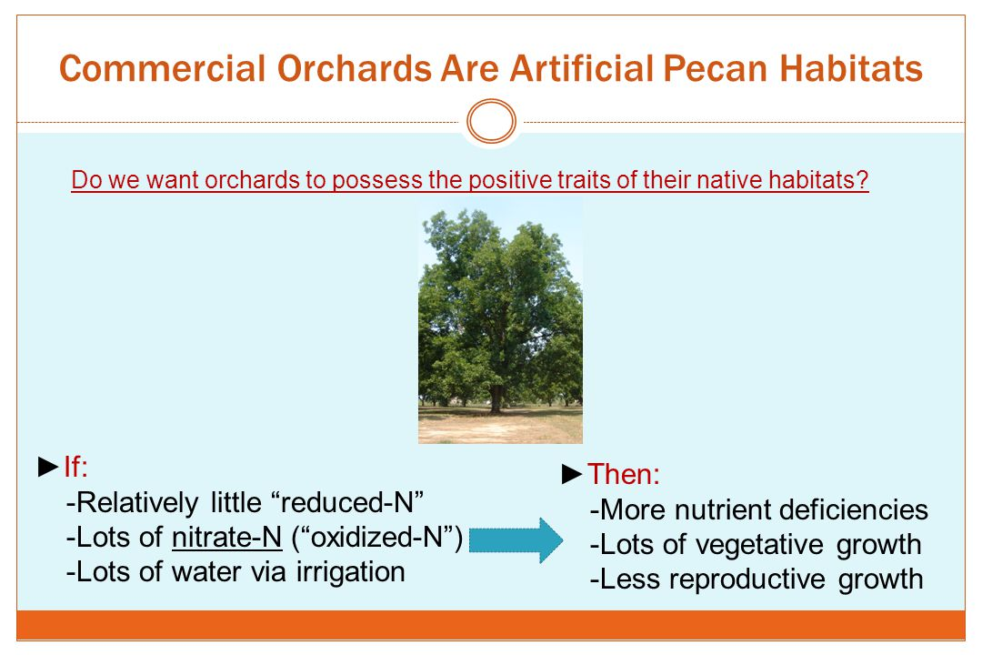 """Commercial Orchards Are Artificial Pecan Habitats ►If: -Relatively little """"reduced-N"""" -Lots of nitrate-N (""""oxidized-N"""") -Lots of water via irrigation"""