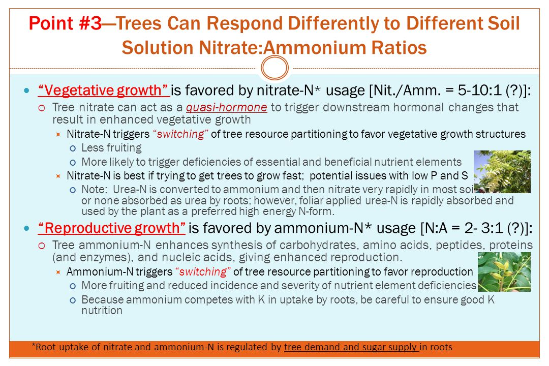 """Point #3—Trees Can Respond Differently to Different Soil Solution Nitrate:Ammonium Ratios """"Vegetative growth"""" is favored by nitrate-N * usage [Nit./Am"""