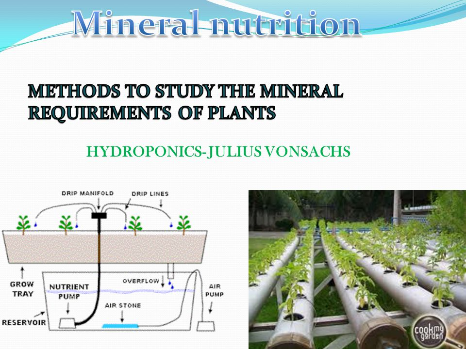 Criteria Absolutely necessary- life cycle of plant is affected Specific Direct involvement in metabolism