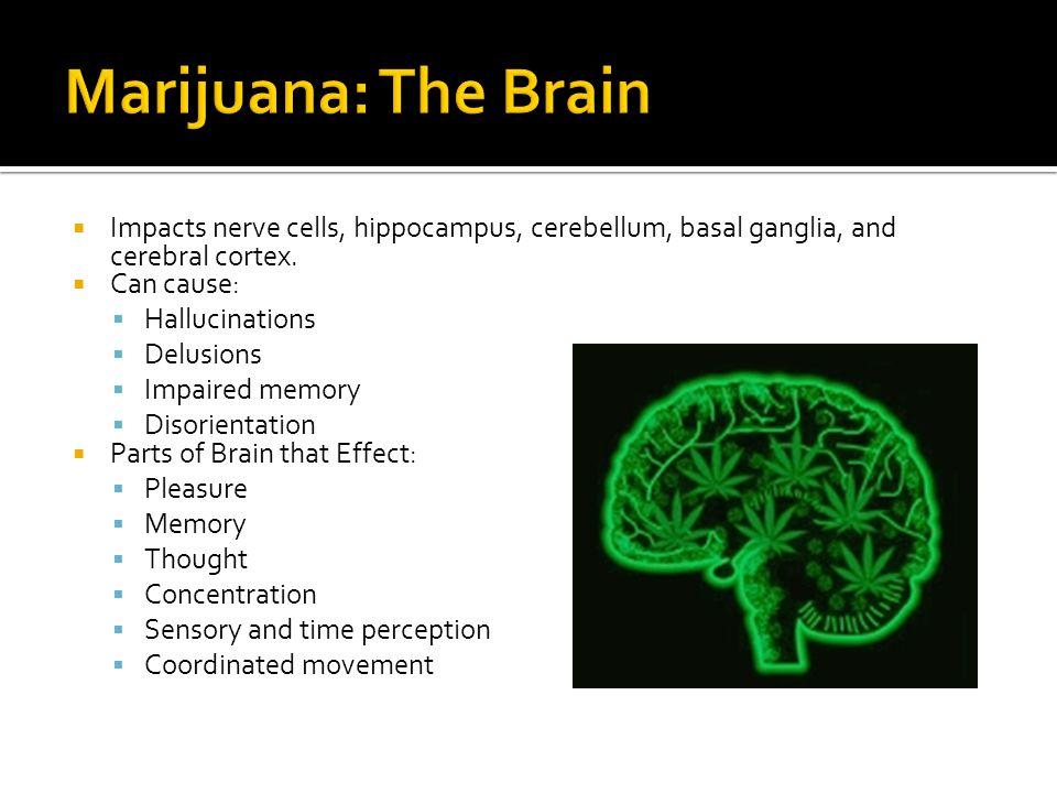  Impacts nerve cells, hippocampus, cerebellum, basal ganglia, and cerebral cortex.