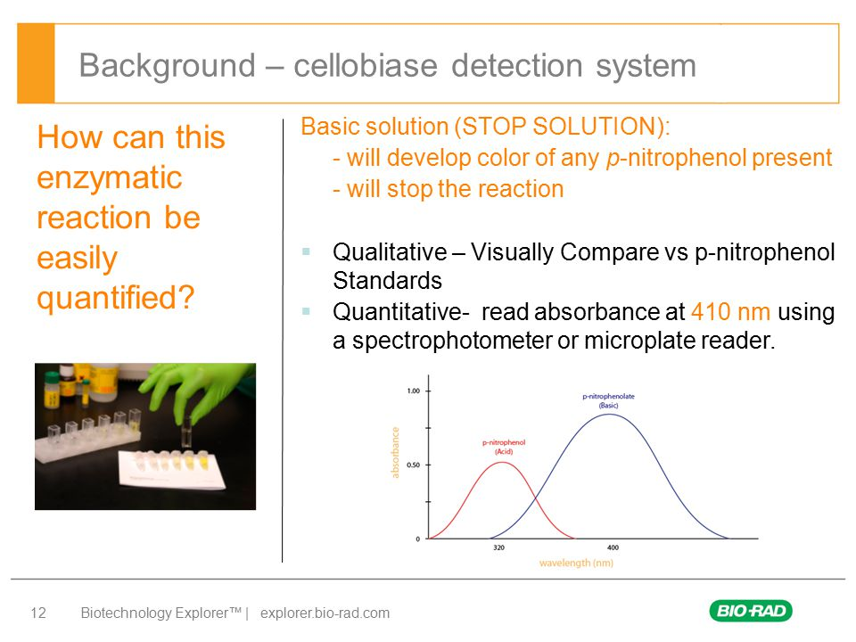 Biotechnology Explorer™ | explorer.bio-rad.com 12 How can this enzymatic reaction be easily quantified? Basic solution (STOP SOLUTION): - will develop