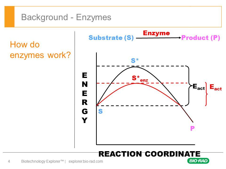 Biotechnology Explorer™   explorer.bio-rad.com 5 How do enzymes work.