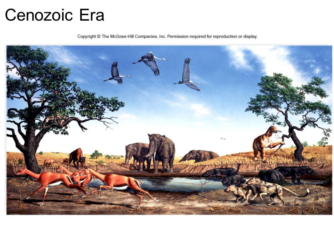 Cenozoic Era