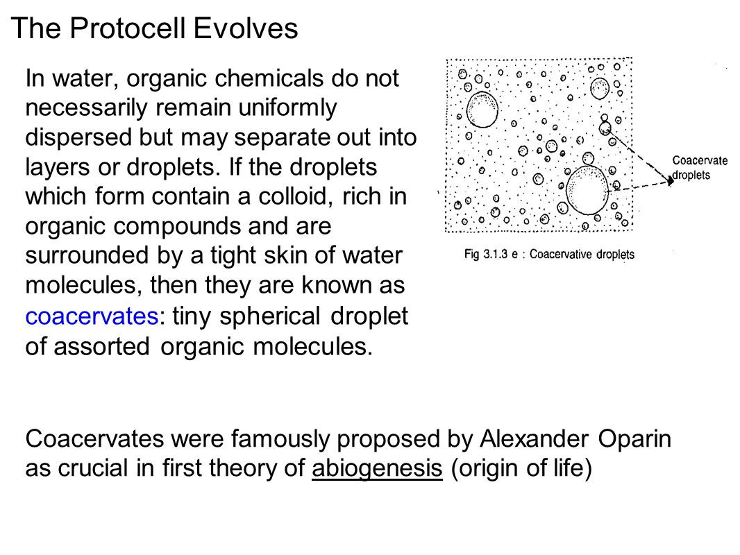 The Protocell Evolves In water, organic chemicals do not necessarily remain uniformly dispersed but may separate out into layers or droplets.
