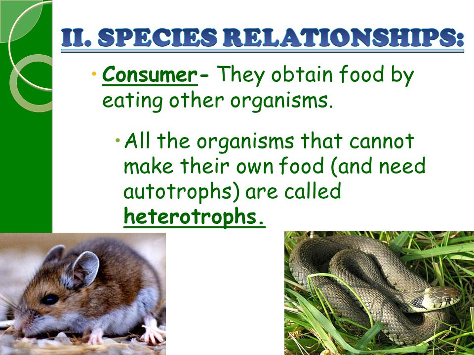  Consumer- They obtain food by eating other organisms.  All the organisms that cannot make their own food (and need autotrophs) are called heterotro