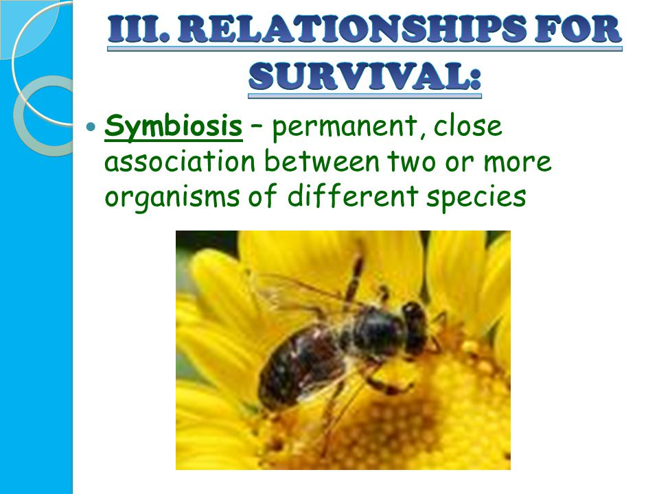 Symbiosis – permanent, close association between two or more organisms of different species