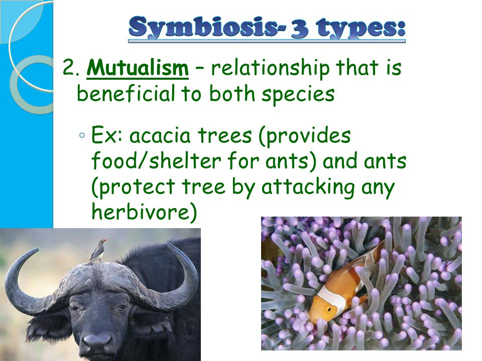 2. Mutualism – relationship that is beneficial to both species ◦ Ex: acacia trees (provides food/shelter for ants) and ants (protect tree by attacking