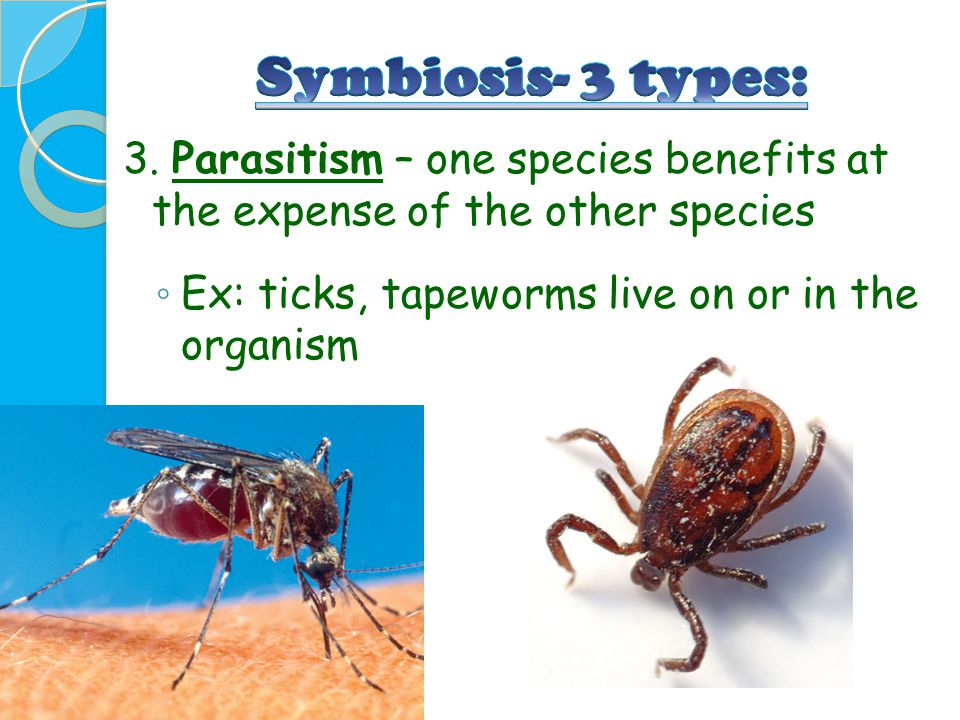 3. Parasitism – one species benefits at the expense of the other species ◦ Ex: ticks, tapeworms live on or in the organism