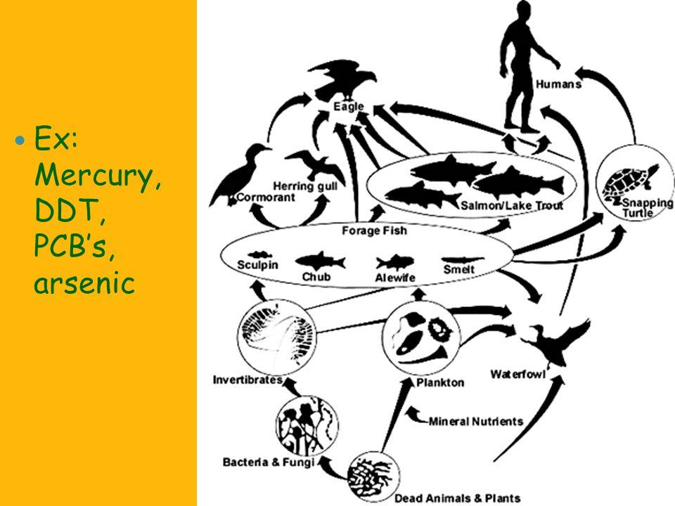 Ex: Mercury, DDT, PCB's, arsenic