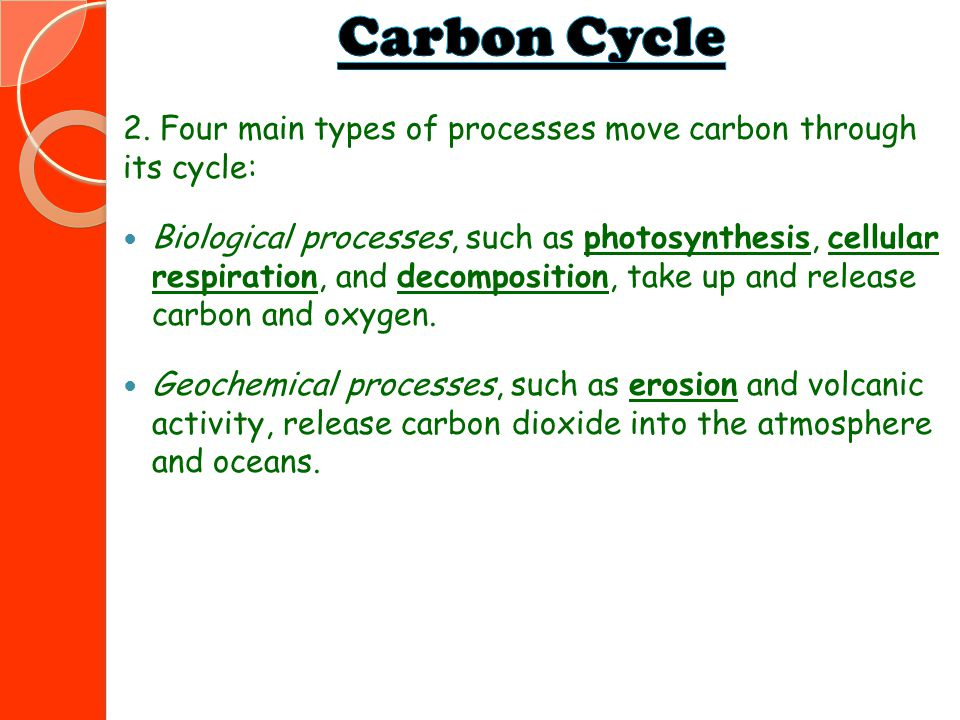 2. Four main types of processes move carbon through its cycle: Biological processes, such as photosynthesis, cellular respiration, and decomposition,