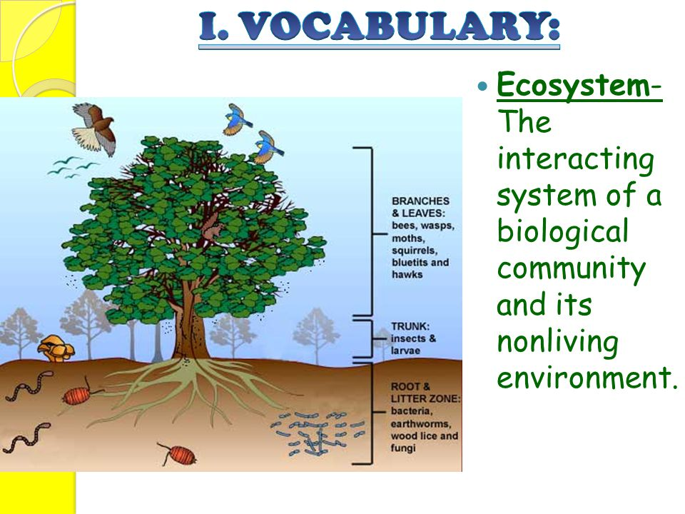 Ecosystem- The interacting system of a biological community and its nonliving environment.