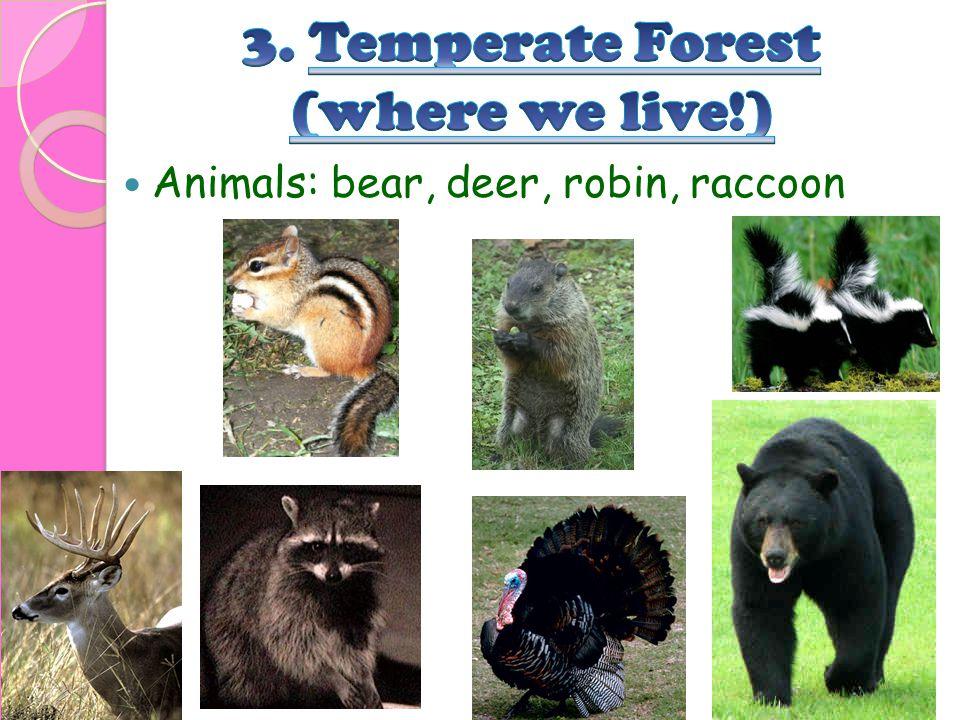 Animals: bear, deer, robin, raccoon