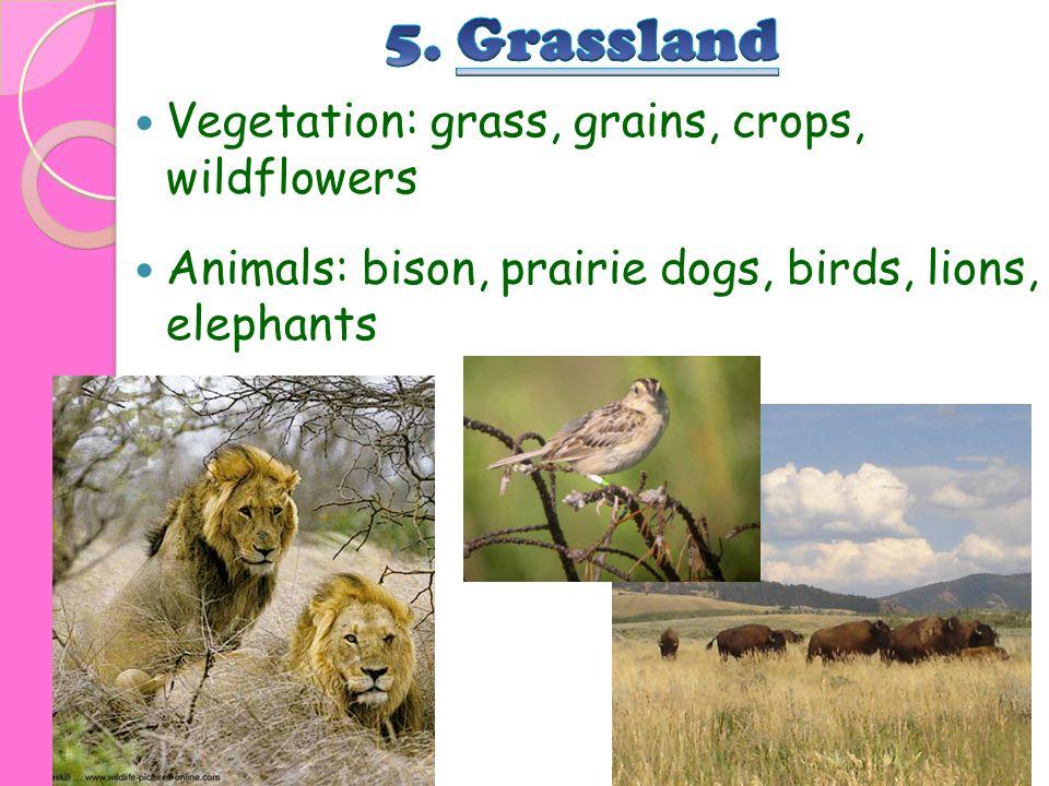 Vegetation: grass, grains, crops, wildflowers Animals: bison, prairie dogs, birds, lions, elephants