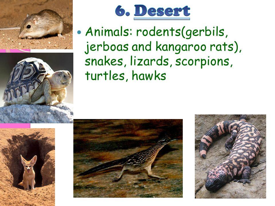 Animals: rodents(gerbils, jerboas and kangaroo rats), snakes, lizards, scorpions, turtles, hawks