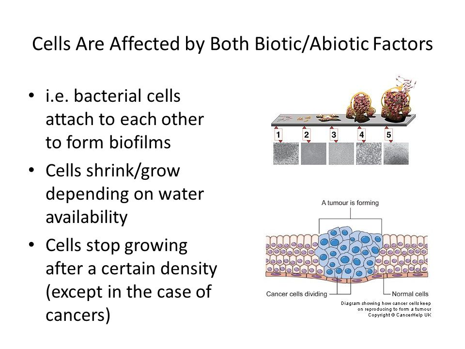 Cells Are Affected by Both Biotic/Abiotic Factors i.e.