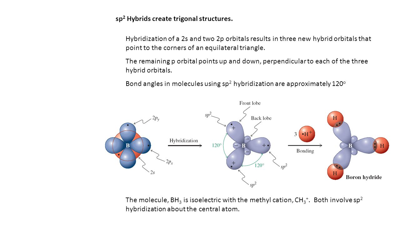 sp 2 Hybrids create trigonal structures. Hybridization of a 2s and two 2p orbitals results in three new hybrid orbitals that point to the corners of a