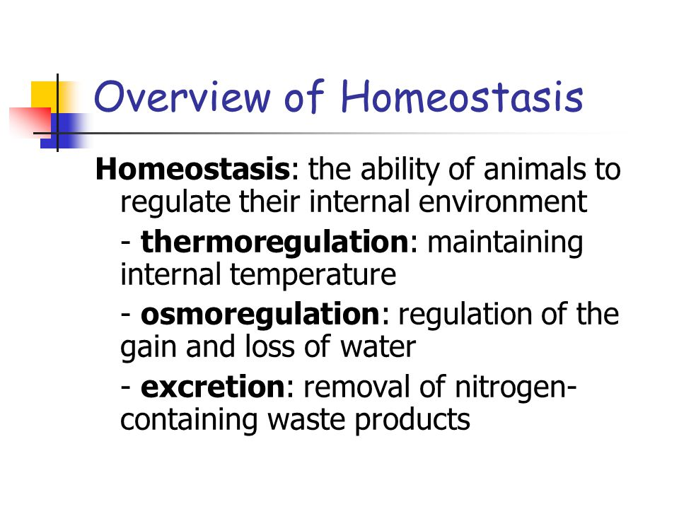 Overview of Homeostasis Homeostasis: the ability of animals to regulate their internal environment - thermoregulation: maintaining internal temperatur
