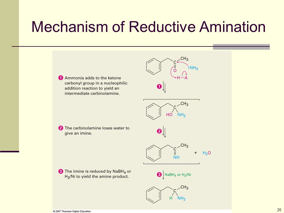 26 Mechanism of Reductive Amination