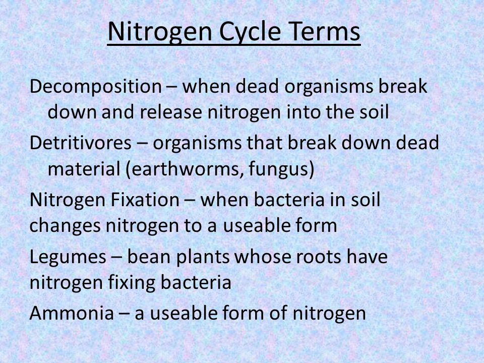 Nitrogen Cycle Terms Decomposition – when dead organisms break down and release nitrogen into the soil Detritivores – organisms that break down dead material (earthworms, fungus) Nitrogen Fixation – when bacteria in soil changes nitrogen to a useable form Legumes – bean plants whose roots have nitrogen fixing bacteria Ammonia – a useable form of nitrogen