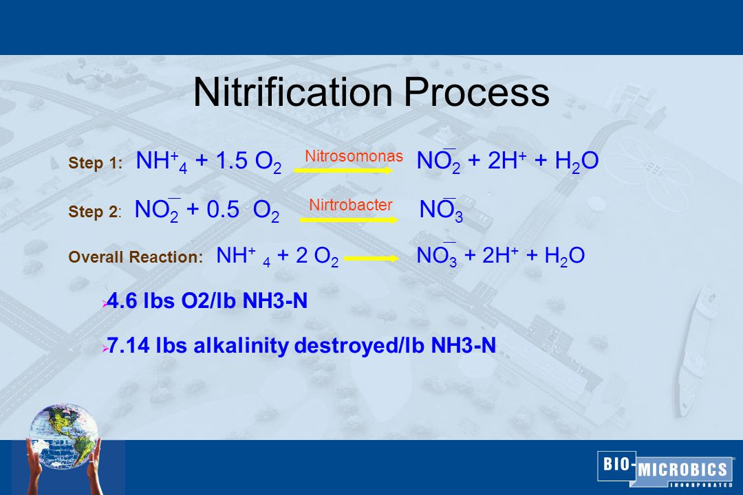 Nitrification Process Step 1: NH + 4 + 1.5 O 2 Nitrosomonas NO 2 + 2H + + H 2 O Step 2: NO 2 + 0.5 O 2 Nirtrobacter NO 3 Overall Reaction: NH + 4 + 2 O 2 NO 3 + 2H + + H 2 O  4.6 lbs O2/lb NH3-N  7.14 lbs alkalinity destroyed/lb NH3-N