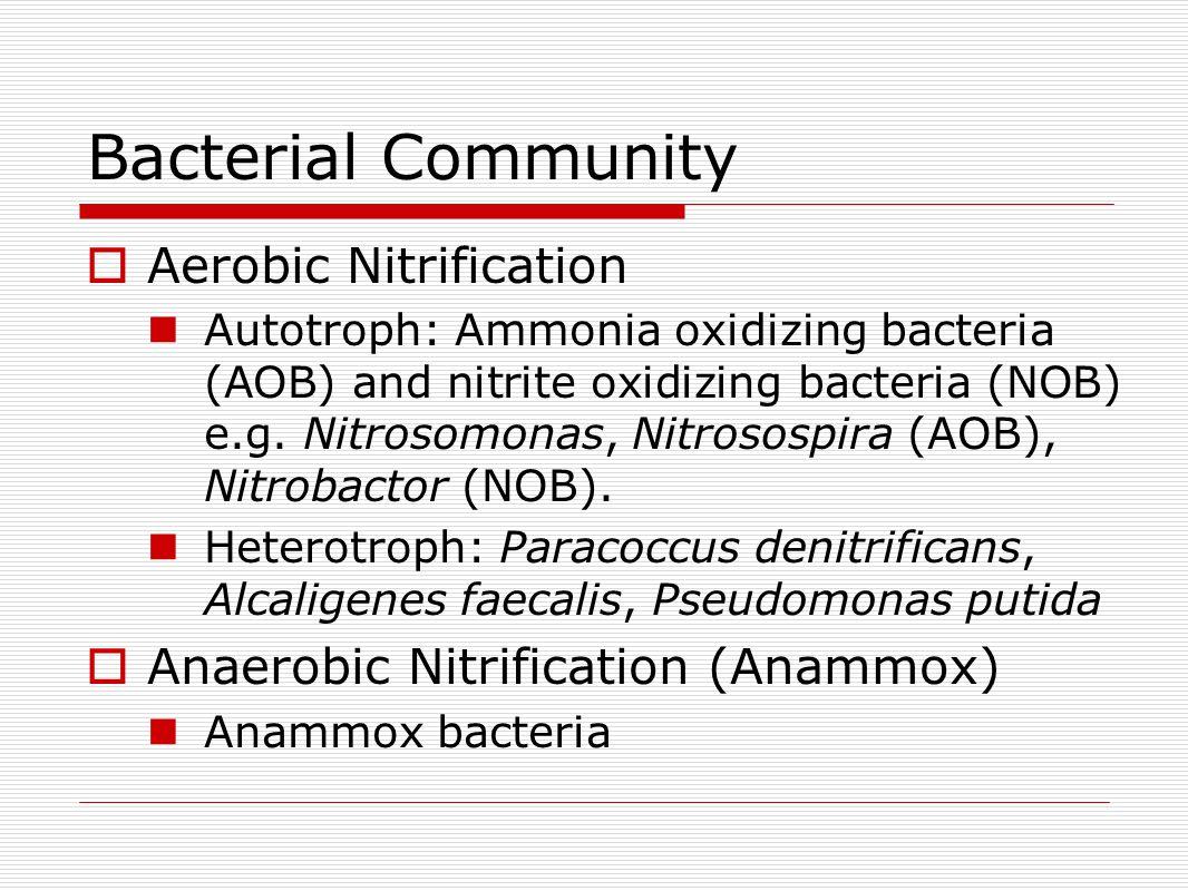 Bacterial Community  Aerobic Nitrification Autotroph: Ammonia oxidizing bacteria (AOB) and nitrite oxidizing bacteria (NOB) e.g.