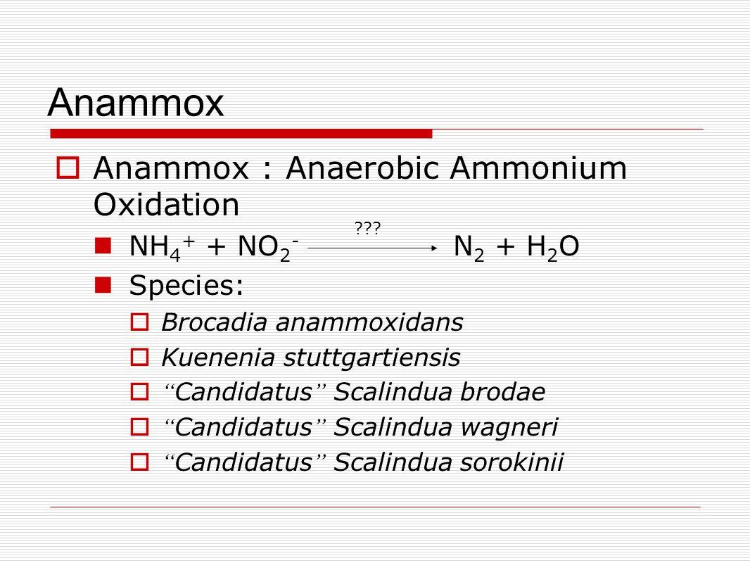 Anammox  Anammox : Anaerobic Ammonium Oxidation NH 4 + + NO 2 - N 2 + H 2 O Species:  Brocadia anammoxidans  Kuenenia stuttgartiensis  Candidatus Scalindua brodae  Candidatus Scalindua wagneri  Candidatus Scalindua sorokinii