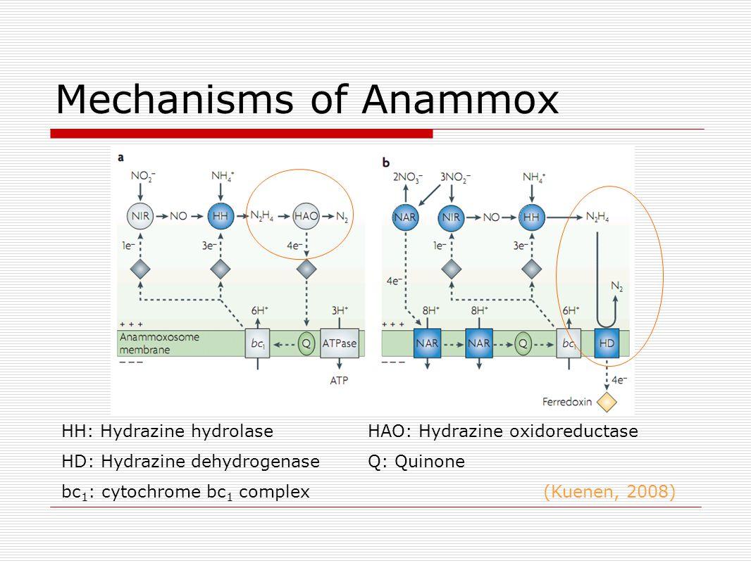 Mechanisms of Anammox HH: Hydrazine hydrolase HAO: Hydrazine oxidoreductase HD: Hydrazine dehydrogenase Q: Quinone bc 1 : cytochrome bc 1 complex (Kuenen, 2008)