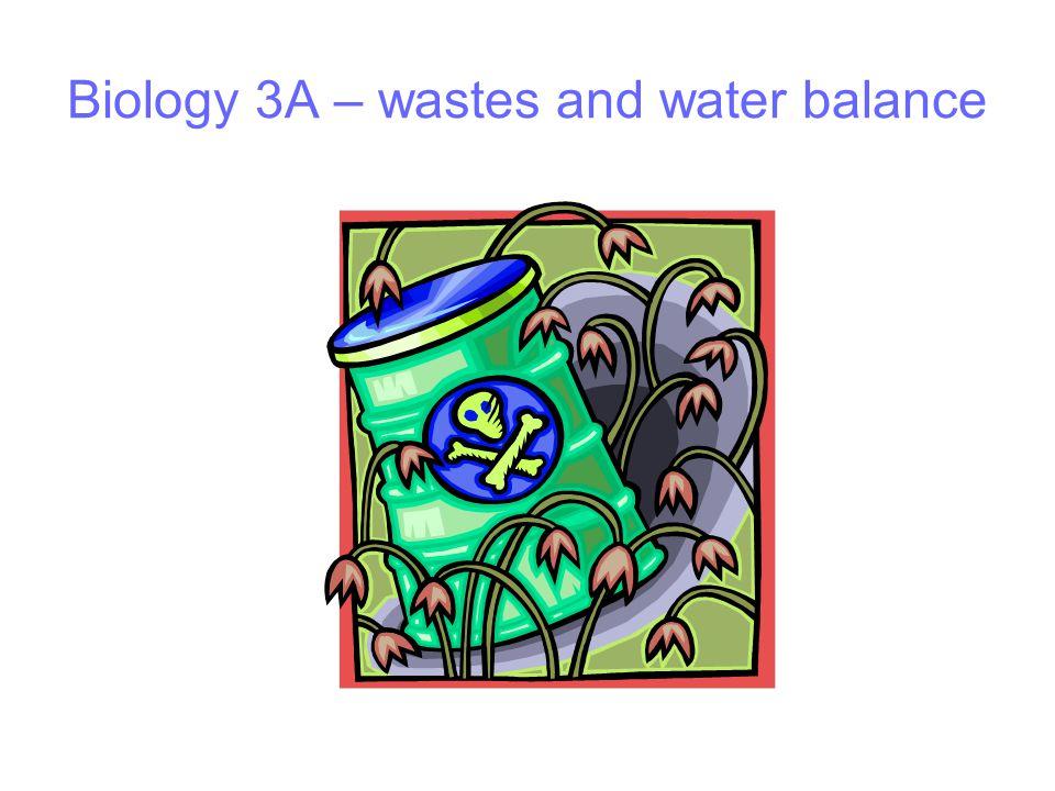 Biology 3A – wastes and water balance