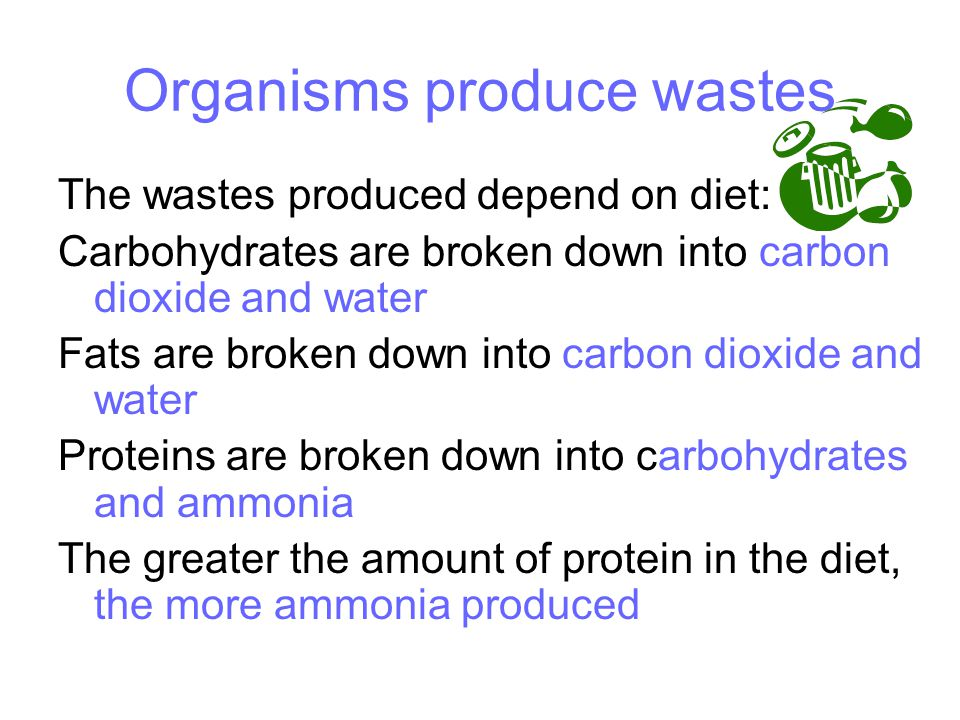Organisms produce wastes The wastes produced depend on diet: Carbohydrates are broken down into carbon dioxide and water Fats are broken down into carbon dioxide and water Proteins are broken down into carbohydrates and ammonia The greater the amount of protein in the diet, the more ammonia produced