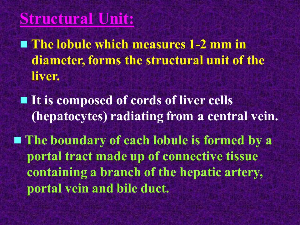 Structural Unit:  The lobule which measures 1-2 mm in diameter, forms the structural unit of the liver.