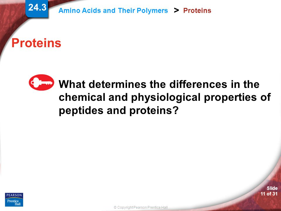 © Copyright Pearson Prentice Hall Amino Acids and Their Polymers > Slide 11 of 31 24.3 Proteins What determines the differences in the chemical and ph