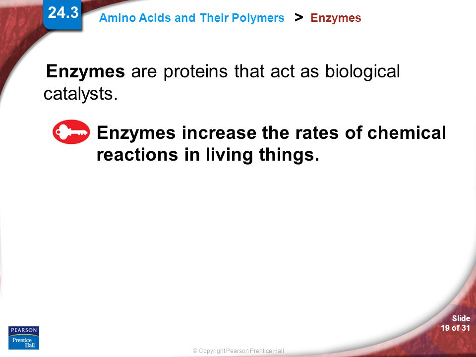 Slide 19 of 31 © Copyright Pearson Prentice Hall 24.3 Amino Acids and Their Polymers > Enzymes Enzymes are proteins that act as biological catalysts.