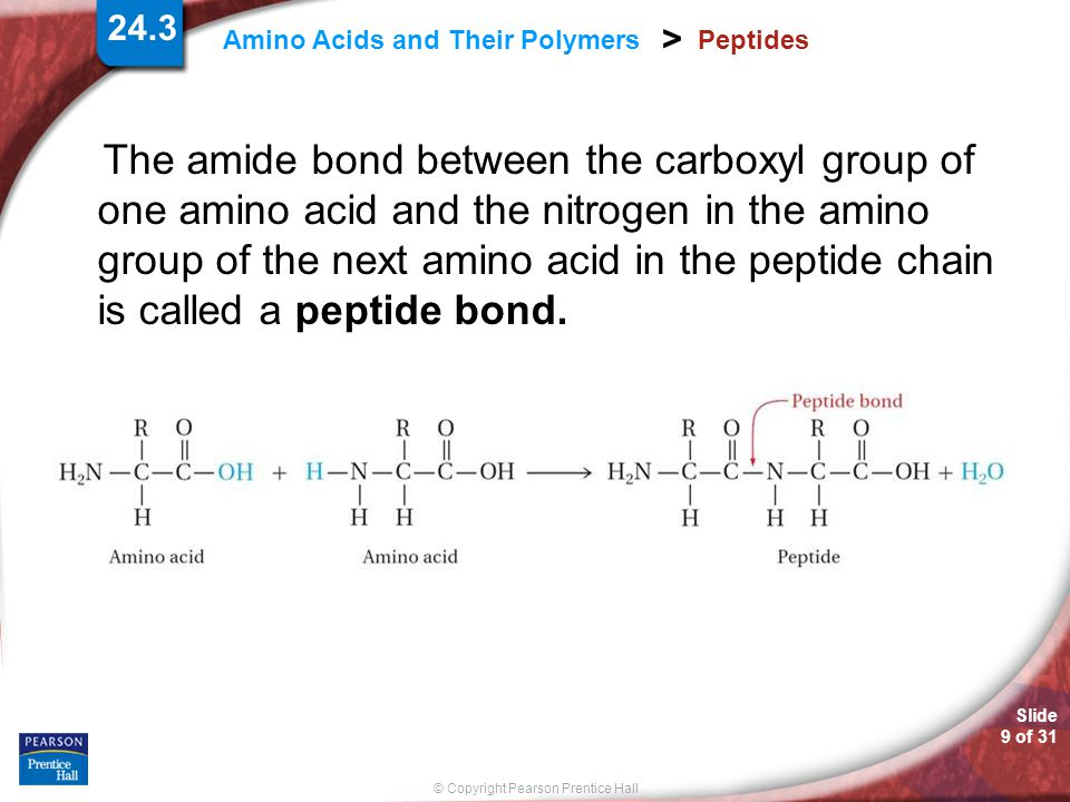 Slide 9 of 31 © Copyright Pearson Prentice Hall 24.3 Amino Acids and Their Polymers > Peptides The amide bond between the carboxyl group of one amino