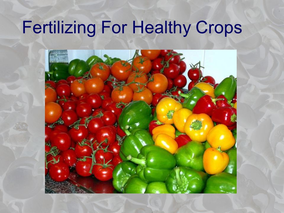 Fertilizing For Healthy Crops
