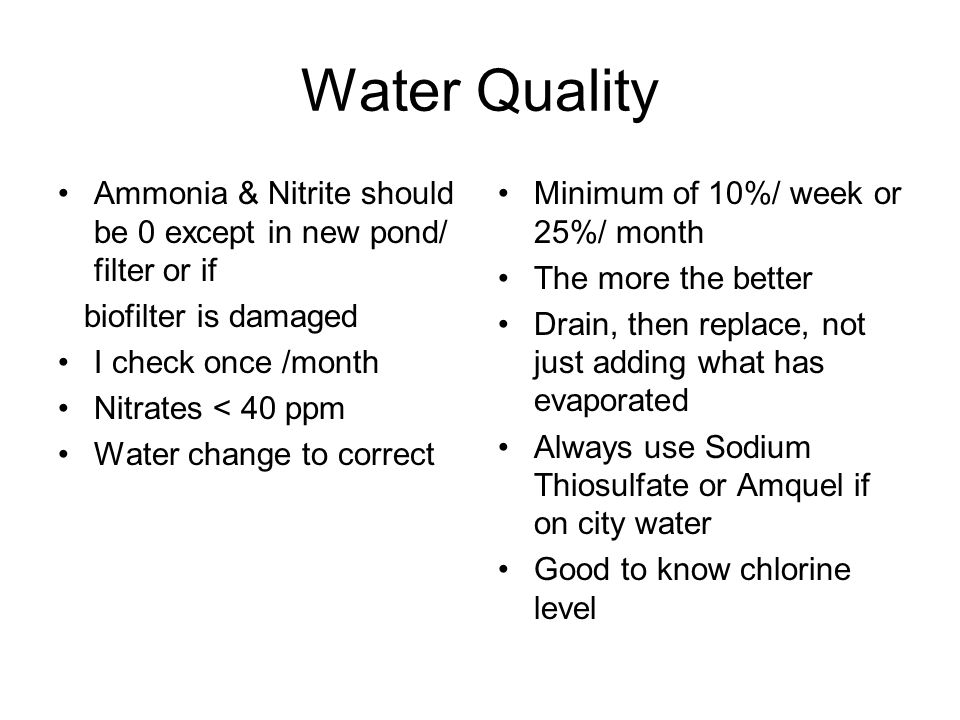 Water Quality Ammonia & Nitrite should be 0 except in new pond/ filter or if biofilter is damaged I check once /month Nitrates < 40 ppm Water change t