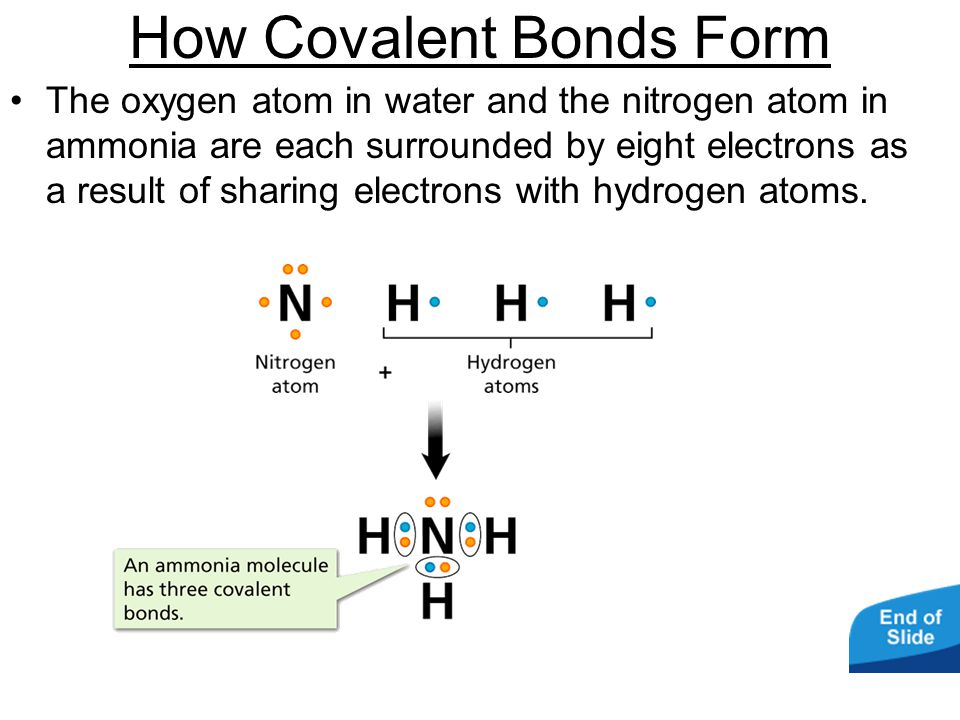 - Covalent Bonds How Covalent Bonds Form The oxygen atom in water and the nitrogen atom in ammonia are each surrounded by eight electrons as a result of sharing electrons with hydrogen atoms.