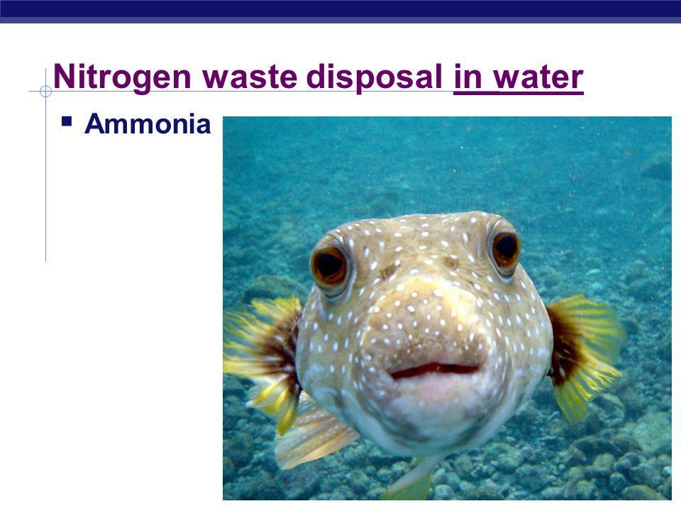 Regents Biology Nitrogen waste disposal in water  Ammonia 2008-2009