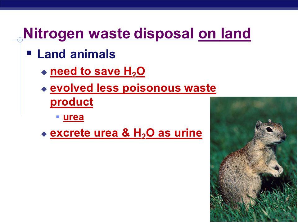 Regents Biology Nitrogen waste disposal on land  Land animals  need to save H 2 O  evolved less poisonous waste product  urea  excrete urea & H 2 O as urine 2008-2009