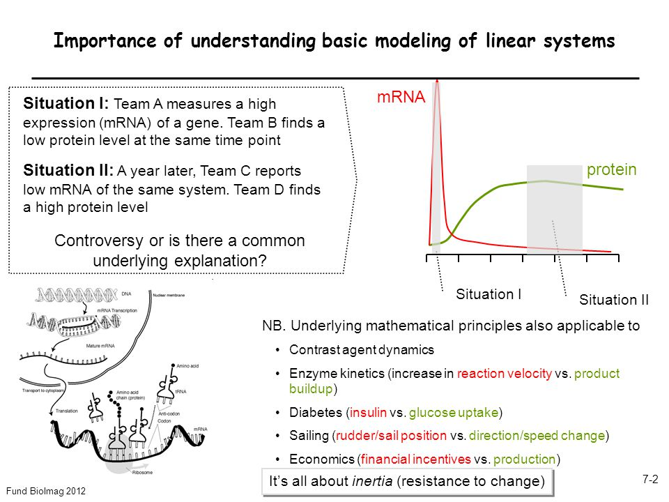 Fund BioImag 2012 7-2 Importance of understanding basic modeling of linear systems Situation I: Team A measures a high expression (mRNA) of a gene. Te