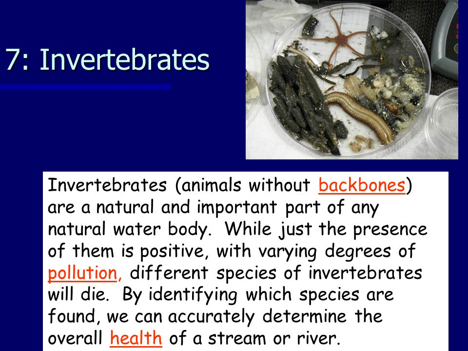 7: Invertebrates Invertebrates (animals without backbones) are a natural and important part of any natural water body.