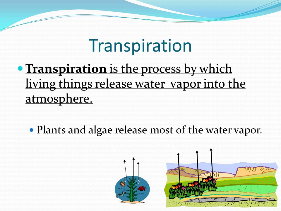 Quick Check What are two processes that allow water to move into the atmosphere? 6