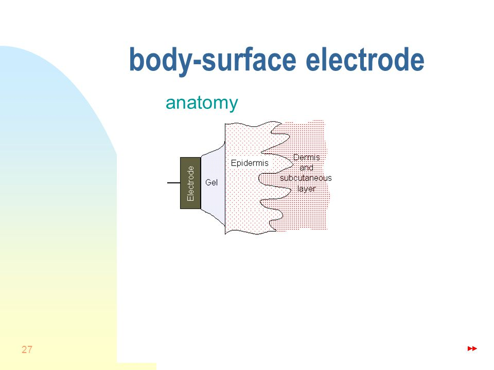 27 body-surface electrode anatomy