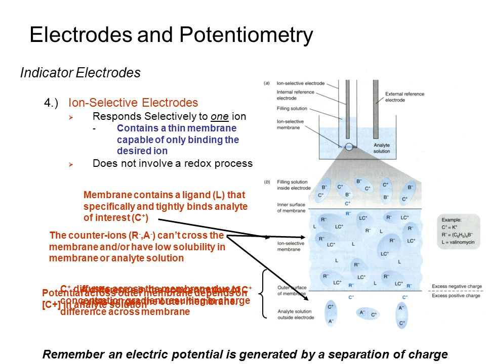 C + diffuses across the membrane due to concentration gradient resulting in charge difference across membrane Electrodes and Potentiometry Indicator Electrodes 4.)Ion-Selective Electrodes  Responds Selectively to one ion - Contains a thin membrane capable of only binding the desired ion  Does not involve a redox process Membrane contains a ligand (L) that specifically and tightly binds analyte of interest (C + ) A difference in the concentration of C + exists across the outer membrane.