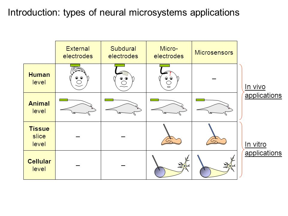 – –– –– External electrodes Subdural electrodes Micro- electrodes Microsensors Human level Animal level Tissue slice level Cellular level Introduction