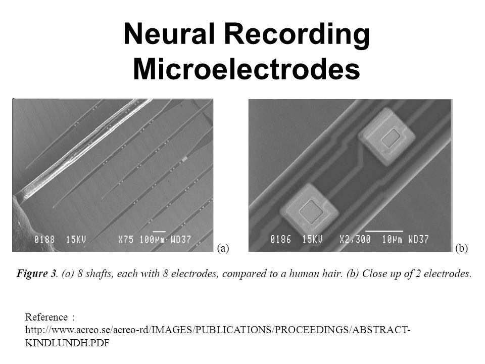 Neural Recording Microelectrodes Reference : http://www.acreo.se/acreo-rd/IMAGES/PUBLICATIONS/PROCEEDINGS/ABSTRACT- KINDLUNDH.PDF