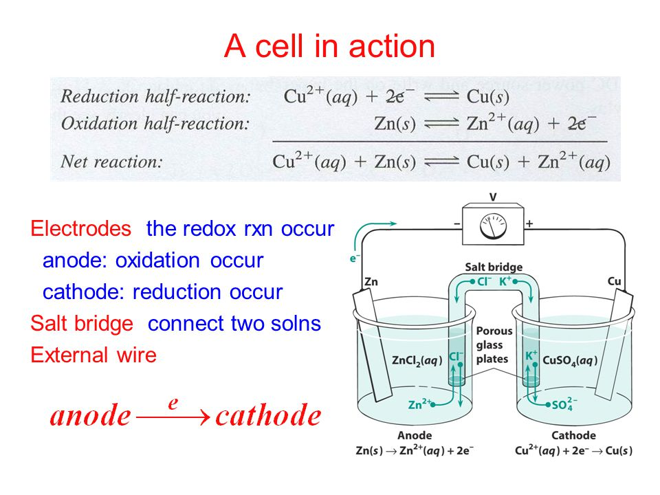 A cell in action Electrodes: the redox rxn occur anode: oxidation occur cathode: reduction occur Salt bridge: connect two solns.