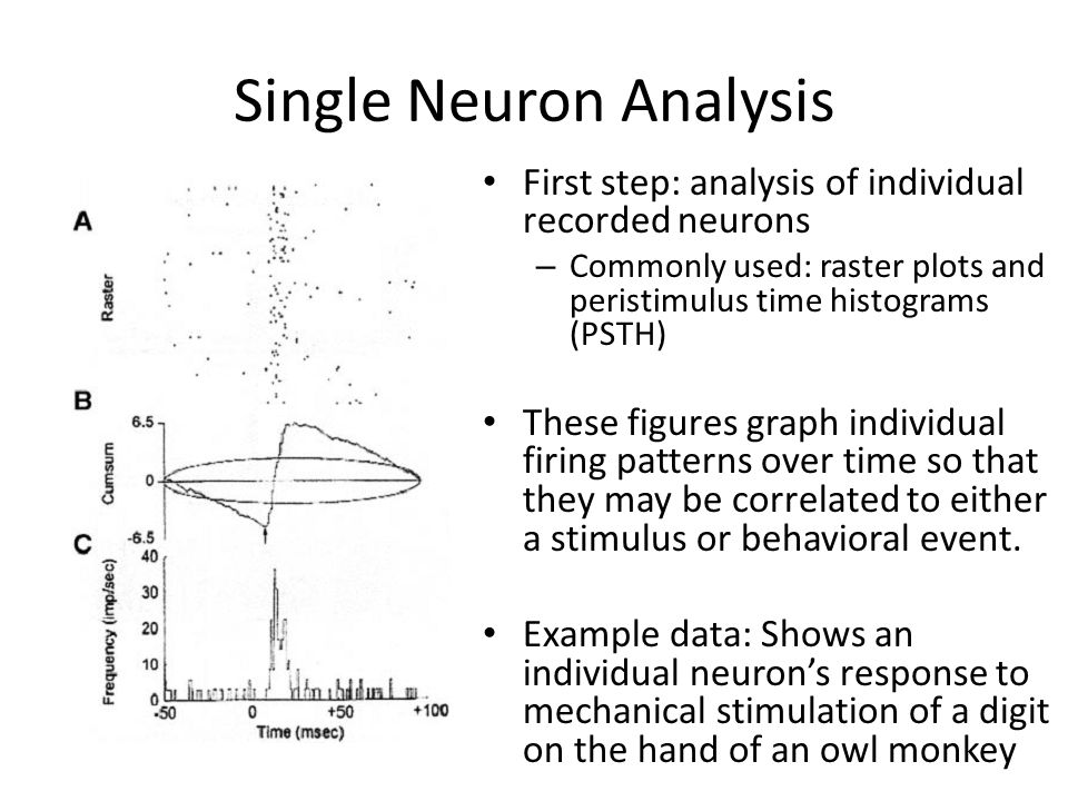 Single Neuron Analysis First step: analysis of individual recorded neurons – Commonly used: raster plots and peristimulus time histograms (PSTH) These