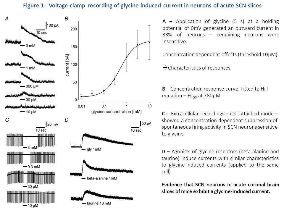 Figure 1. Voltage-clamp recording of glycine-induced current in neurons of acute SCN slices D – Agonists of glycine receptors (beta-alanine and taurin